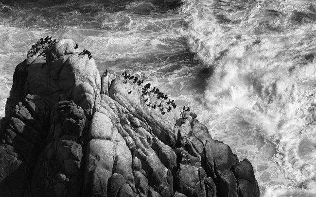 Kormorán pobrežný (Phalacrocorax capensis), Národná park Table Mountain, Južná Afrika