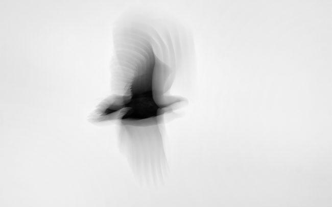 Orliak morský (Haliaeetus albicilla), CHKO Dunajské luhy, Žitný ostrov