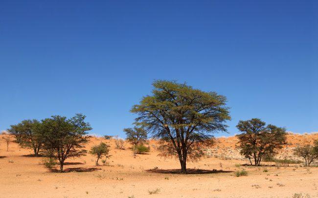 Kalahári sivatag, Kgalagadi Transfrontier Park, Dél-Afrika