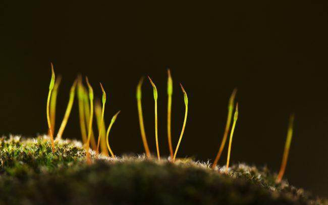 Mosses (Bryophyta), Danube Floodplains Protected Landscape Area, Great Rye Island, Slovakia
