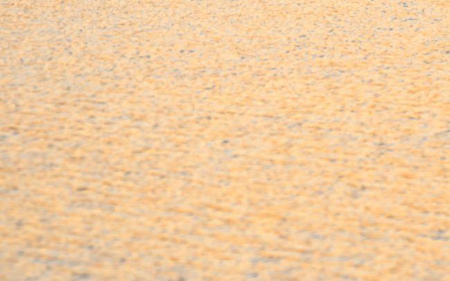 Potápka chochlatá (Podiceps cristatus), Žitný ostrov
