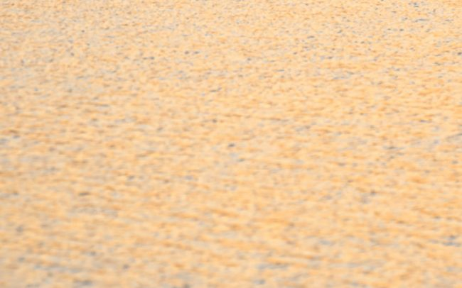 Búbos vöcsök (Podiceps cristatus), Csallóköz