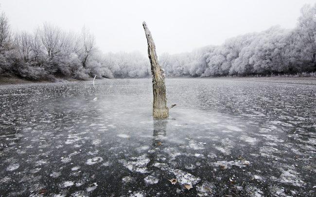 Duna menti erdők Tájvédelmi Körzet, Csallóköz