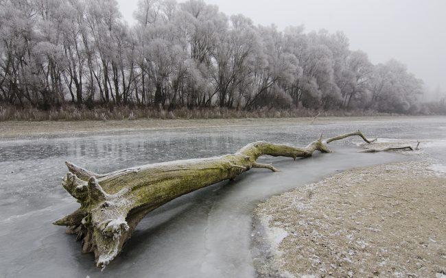 CHKO Dunajské luhy, Žitný ostrov