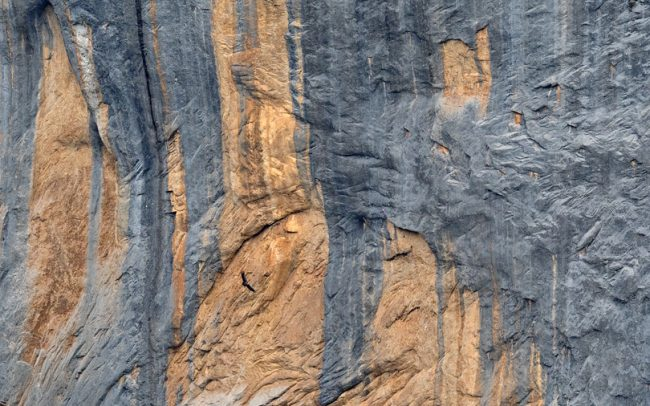 Fakó keselyű (Gyps fulvus), Ordesa i Monte Perdido Nemzeti Park, Spanyolország