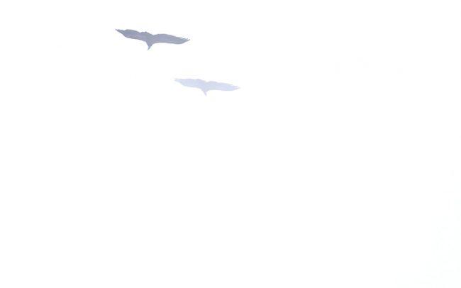Sup bielohlavý (Gyps fulvus), Národný park Ordesa i Monte Perdido, Španielsko